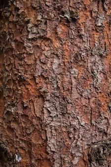 Textuur van rode pijnboomschors boom voor achtergrond