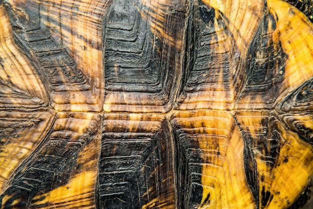 Textuur van schildpadschild kan worden gebruikt voor natuurlijke achtergrond