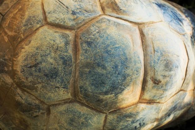 Textuur van schildpadschild.
