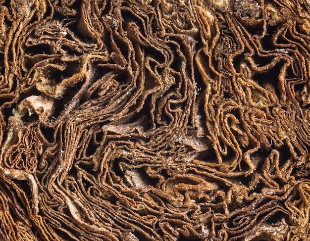 Textuur van sigaar twist. luxe cubaanse sigaar. detailopname.
