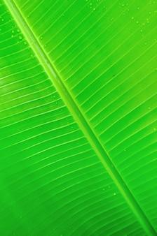 Textuurachtergrond van bananenblad
