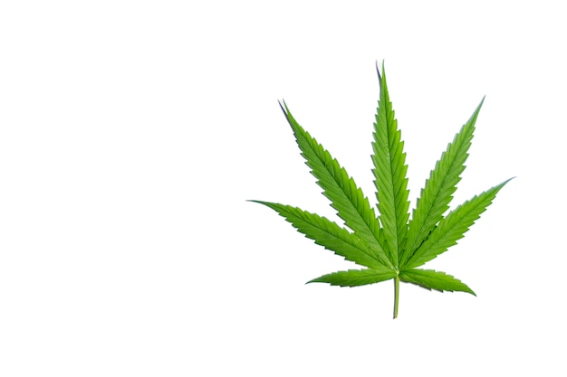 Thai stick groeiende cannabis biologisch op de witte achtergrond