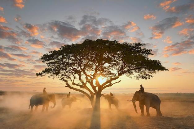 Thailand, de mahout en olifant in het rijstveld tijdens de zonsopgang landschapsmening, silhouetolifant op de achtergrond van zonsopgang