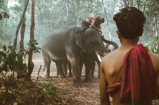 Thaise herders in de jungle met olifanten. historische levensstijlmomenten uit de cultuur van thailand