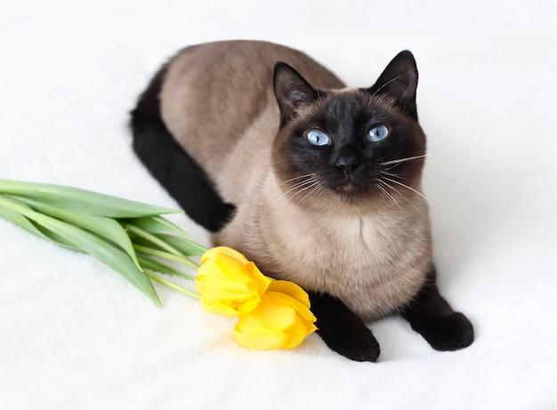 Thaise kat met gele tulpen foto een feestelijke lentekaart met bloemen en dieren