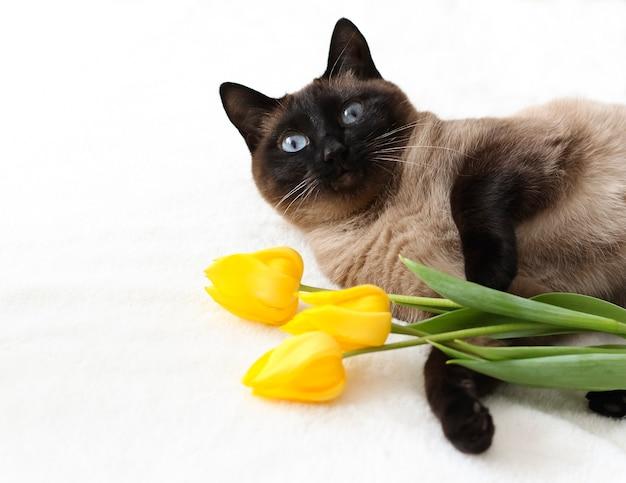 Thaise kat met gele tulpen foto lente wenskaart met bloemen en dieren