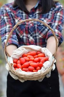 Thaise meisjeslandbouwer die verse tomaten houden bij zonsondergang. voedsel, groenten, landbouw