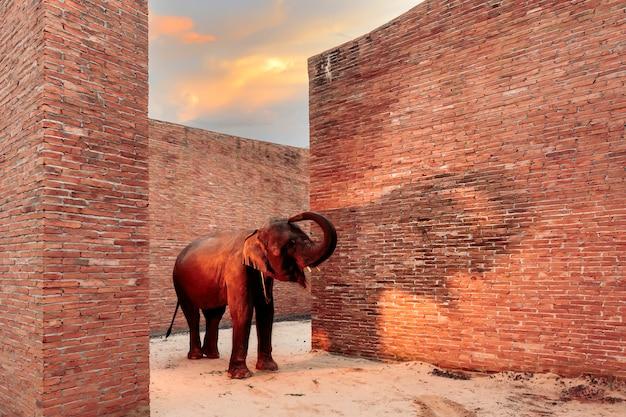 Thaise olifanten lopen in het elephant learning centre; provincie surin; thailand