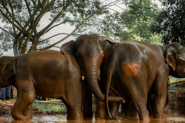 Thaise olifantenfamilie
