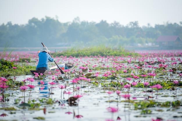 Thaise vissers op thais lotusbloemmeer in zoetwatermeer, de provincie van nong khai