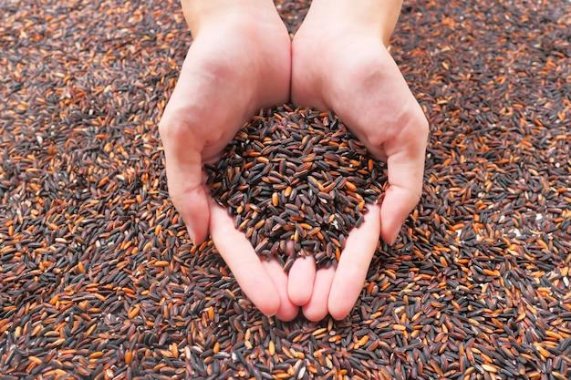 Thaise zwarte jasmijnrijst of rijstbes organische rijst