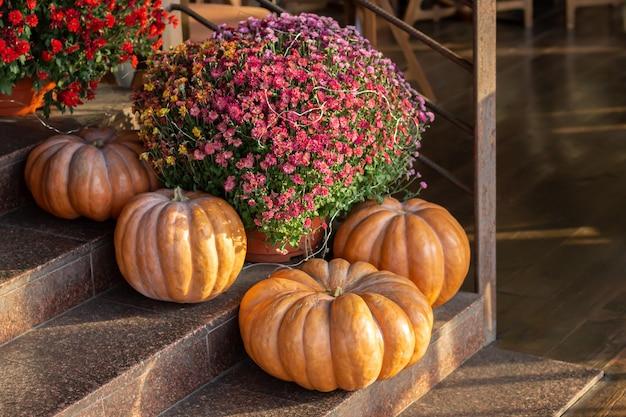 Thanksgiving of halloween versierde voordeur met grote pompoenen en chrysant. herfst seizoen concept