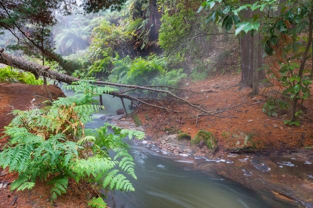 Thermische waterval op kerosine creek, rotorua, nieuw-zeeland. ongewone natuurlijke landschappen