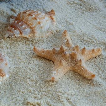 Thorney starfish op zacht zand