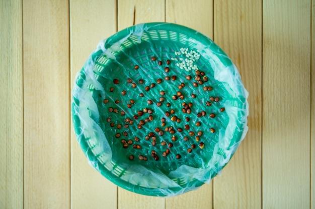 Thuis het planten van groentezaden in een natte pot. doe het zelf (diy) thuis concept.