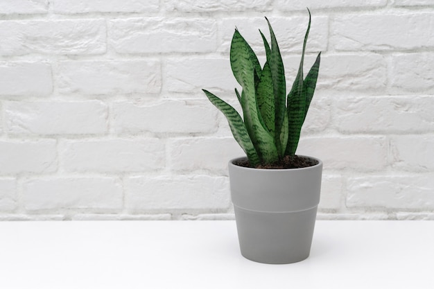 Thuis plant