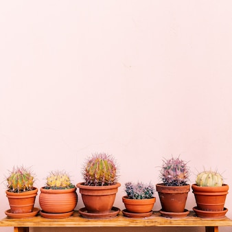 Thuis planten decor. cactus ingesteld op roze muur. cactus liefhebber concept