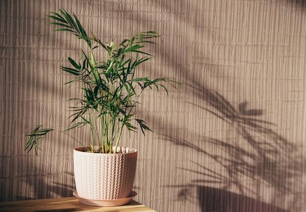 Thuisplanten in een pot