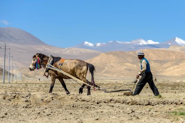 Tibetaanse landbouwersploeg door trekkingspaard op landbouwgrond in tibet