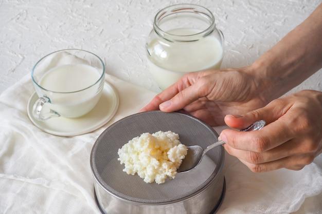 Tibetaanse melkpaddestoel. eigengemaakte melkkefir korrels op een filterzeef.