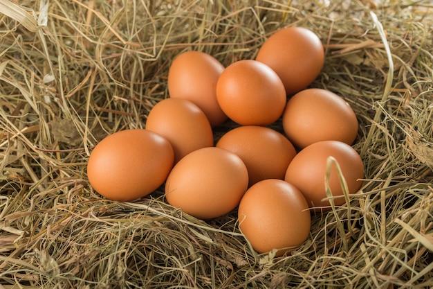 Tien eieren in de kribbe, veel natuurlijke bruine kip op een boerderij in het nest