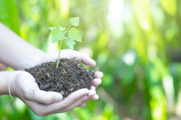 Tienerhanden die de zaailingen in de grond planten. landbouwer die jonge plant, de nieuwe het levensgroei houdt. ecologie, geldbesparing, ontwikkeling of bedrijfsconcept.