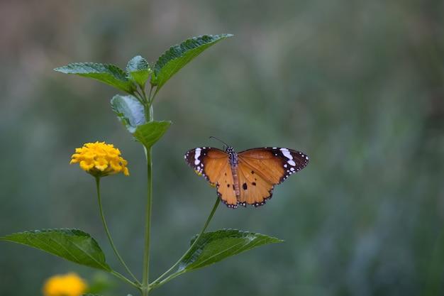 Tiger butterfly op de bloeminstallatie