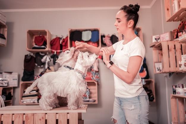 Tijd om te eten. jonge vrouw in spijkerbroek en wit t-shirt die haar schattige pluizige honden voedt