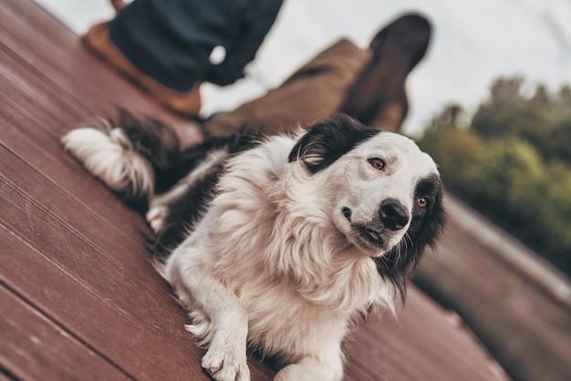 Tijd om te ontspannen. schattige hond liggend op het houten platform bij het meer met zijn baasjes op de achtergrond