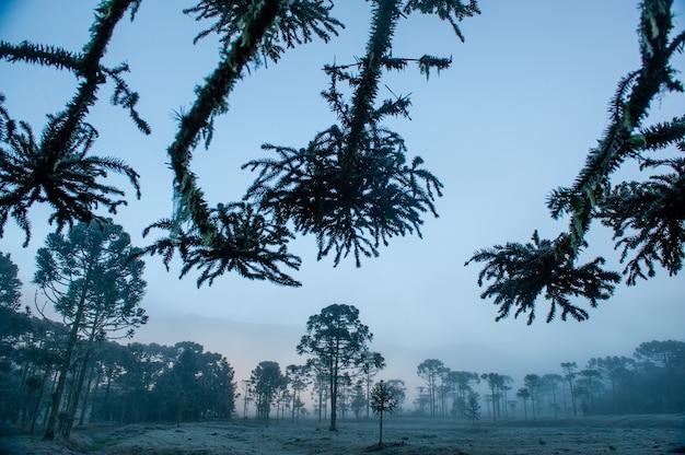 Tijdens het herfst- en winterseizoen in de bergachtige regio urubici in santa catarina, brazilië