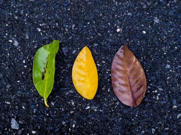 Tijdverandering leren van bladeren achtergrond