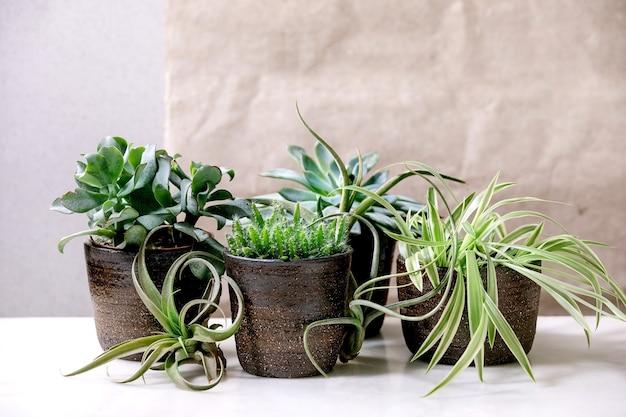 Tillandsia lucht en verschillende vetplanten eonium, cactus in keramische potten staande op witte marmeren tafel.