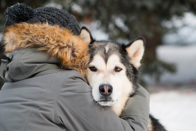 Toegewijde alaskan malamute knuffelen met vrouw in winter woud. detailopname.