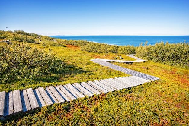 Toendra-landschap van de zayatsky-eilanden met groen dicht gras en lage struiken en een houten pad naar de kust