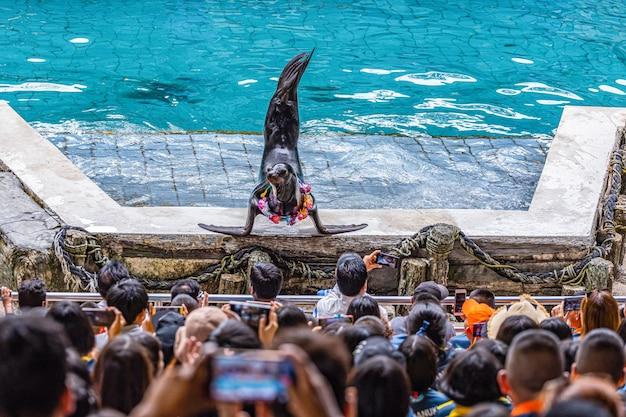 Toeristen gebruiken de vakantie om te ontspannen door dolfijnen en zeeleeuwvoorstellingen te bekijken in safari world park, bangkok, thailand