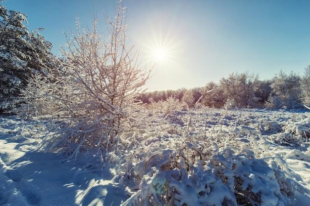 Toeristen lopen in het winterbos