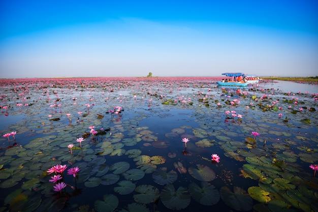 Toeristenboot op de meerrivier met rode het gebieds roze bloem van de lotusbloemlelie op het landschap van de wateraard in het ochtendoriëntatiepunt in udon thani