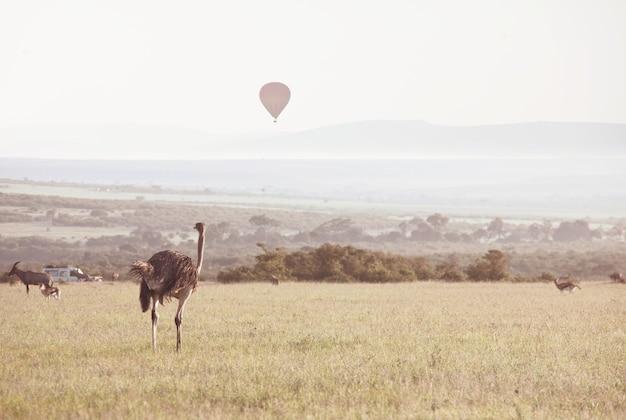 Toeristische attractie op afrikaanse safari in namibië - ballonnen over savanne