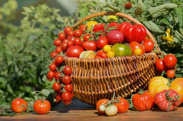 Tomaten in een mand op abstracte onscherpe bokeh achtergrond.