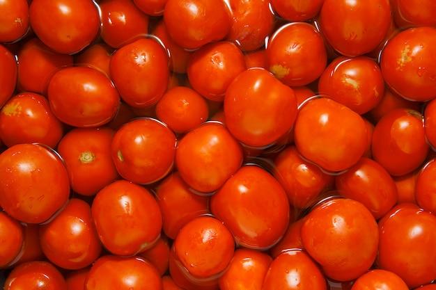 Tomaten in het water