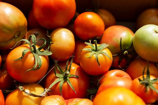 Tomaten van verschillende rijpheid in een doos op een zonnige zomerdag. oogst seizoen. gezonde voeding uit de natuur.