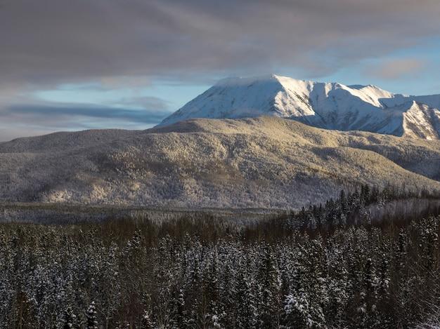 Toneel mening van bomen met bergketen op de achtergrond, de weg van alaska, noordelijke regiona van rockies