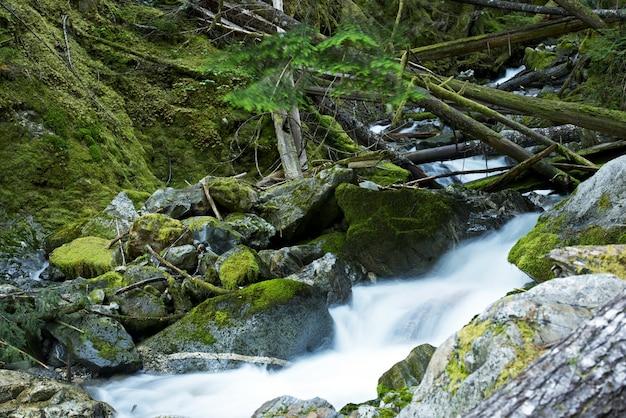 Toneel montana mossy creek