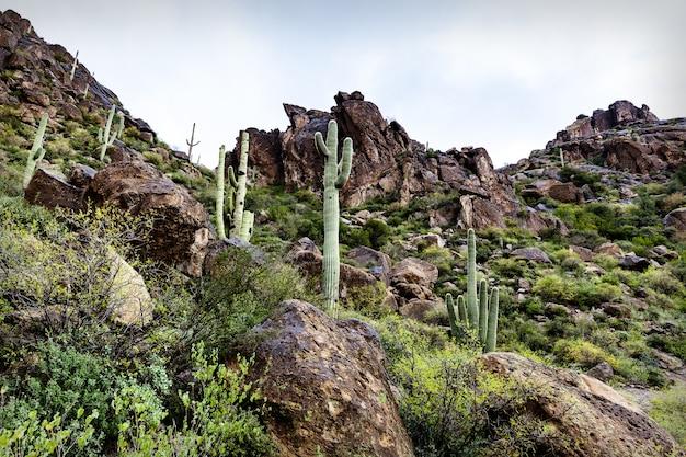 Toneellandschap in woestijn van arizona, de vs