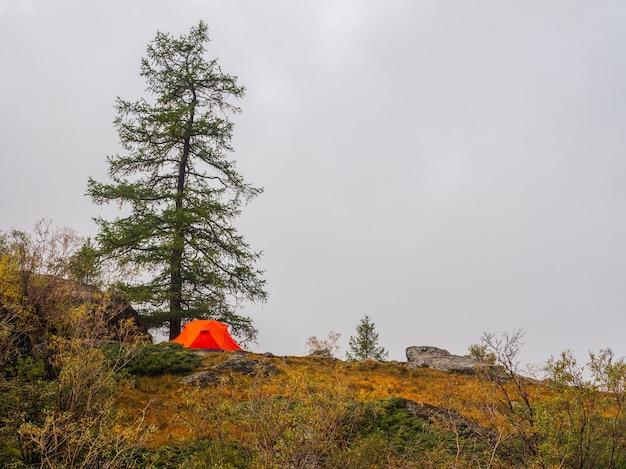 Toneellandschap met één levendige oranje tent en mooie spar op mistige heuvel. sfeervol landschap met alleen een feloranje tent. tent onder boom in herfst naaldbos op heuvel.
