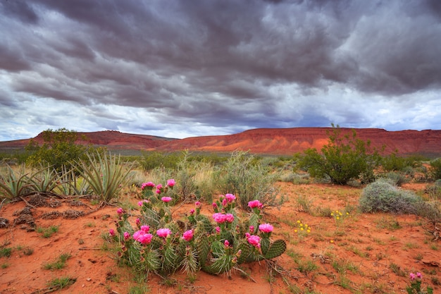Toneellandschap met wolken en cactus in utah