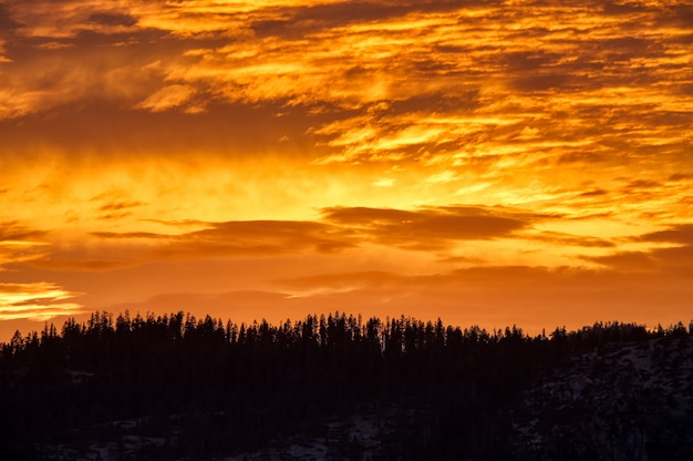 Toneelschot van de oranje hemel boven het bos tijdens zonsondergang