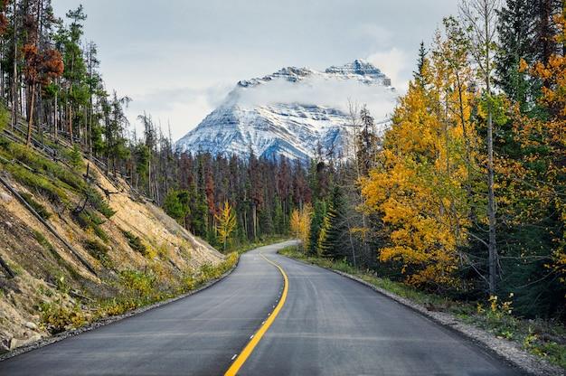 Toneelwegreis met rotsachtige berg in het bos van de de herfstpijnboom bij icefields-brede rijweg met mooi aangelegd landschap