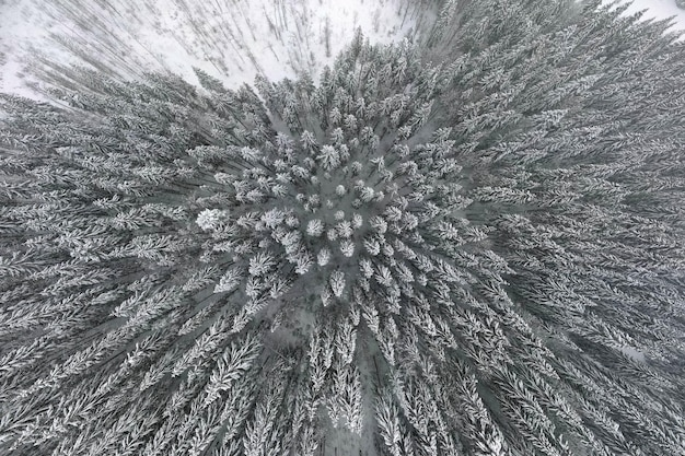 Top-down luchtfoto van besneeuwd groenblijvend dennenbos na zware sneeuwval in winterbergbossen op koude rustige dag.