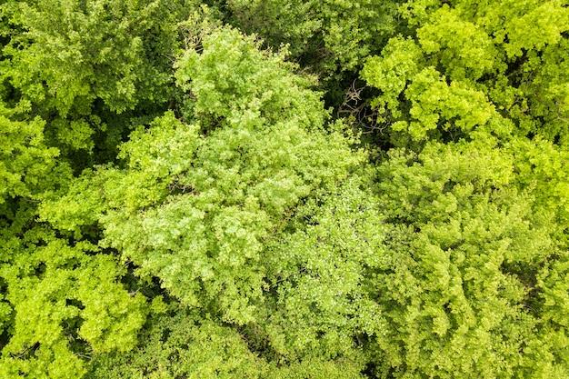 Top-down luchtfoto van groen zomerbos met luifels van veel verse bomen.